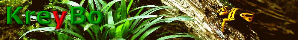 Dendrobates leucomelas - der gelbgebänderte Pfeilgiftfrosch. Meine Erkenntnisse über deren Haltung und Zucht.